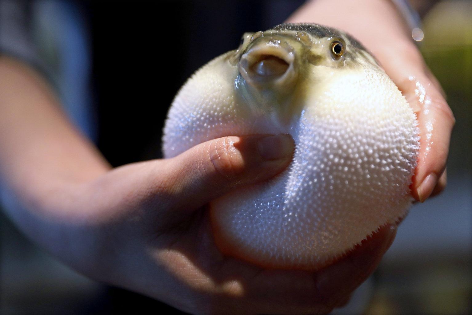 Több mint 300 új halfajt azonosítottak Oroszország édesvizeiben